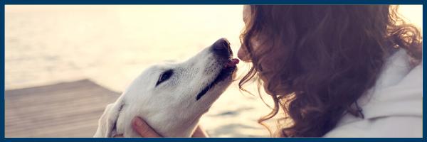 hondenvoeding
