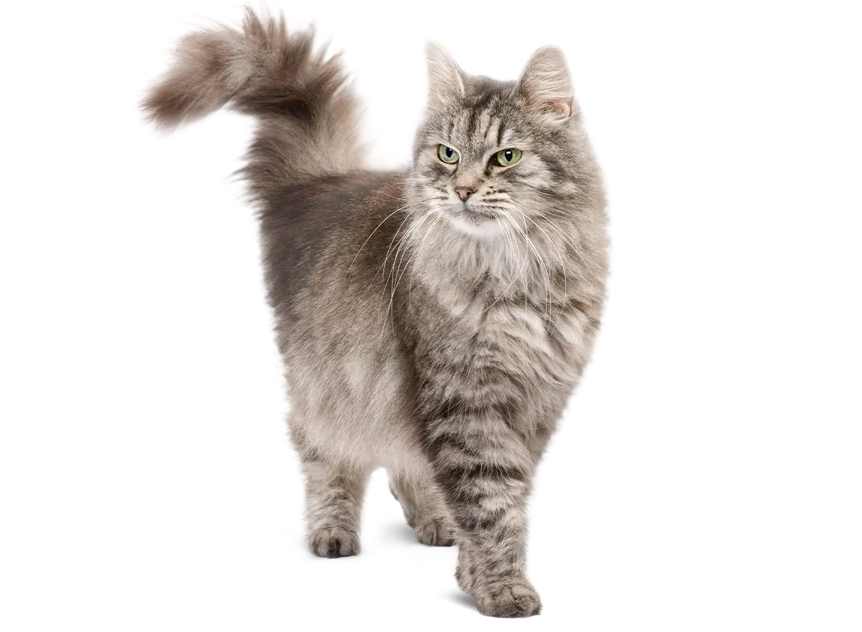 Senior kattenvoeding