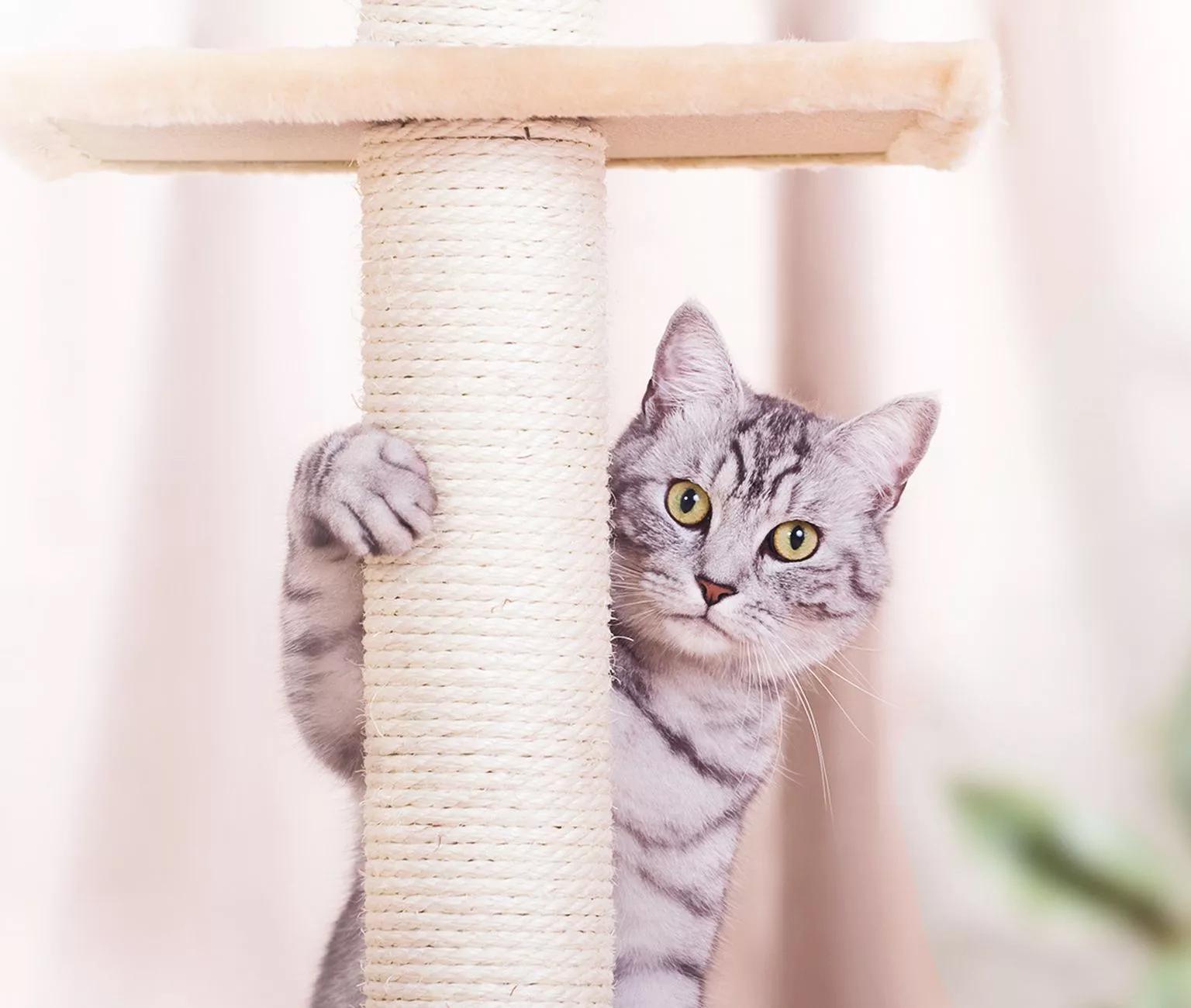 Happy Cat Dierendag