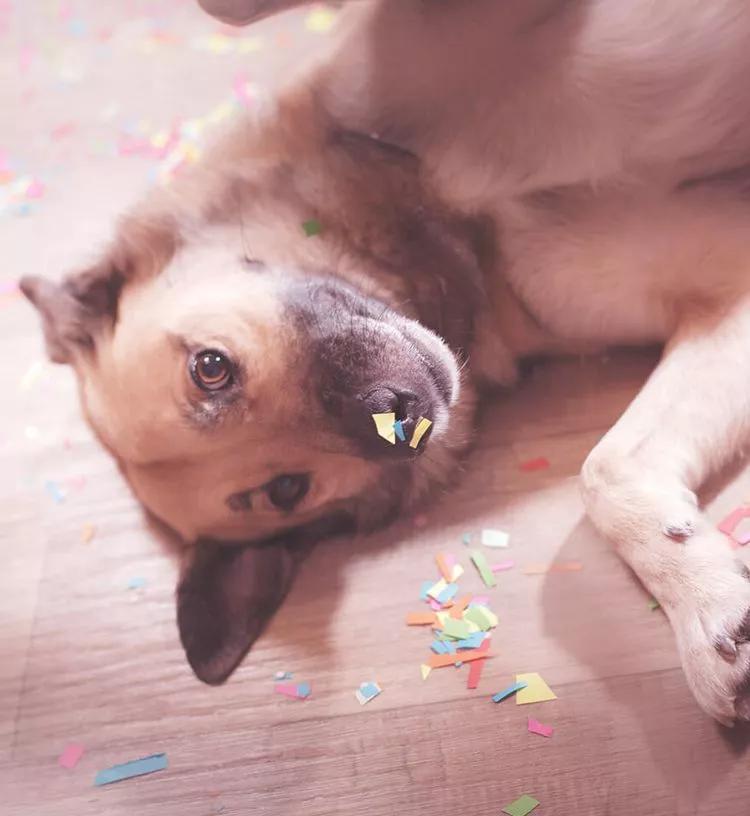 Dierendag actie - Happy dog